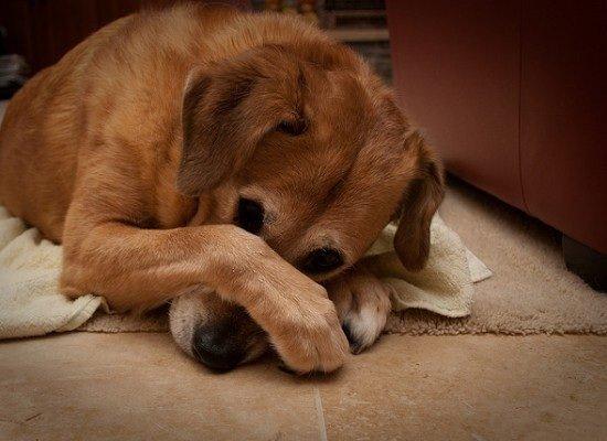 Un chien attendrissant
