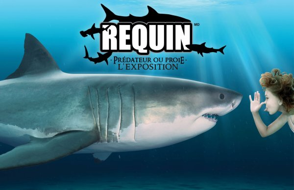 Lalalalère le requin