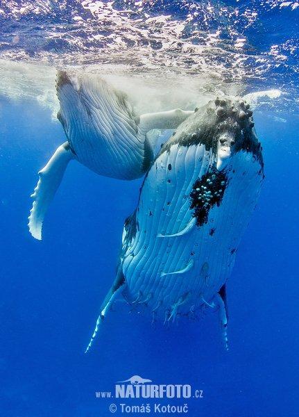 Une belle famille de baleines