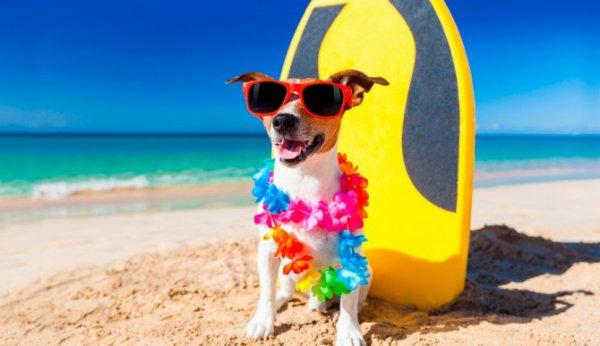 Un chien déjà en vacance