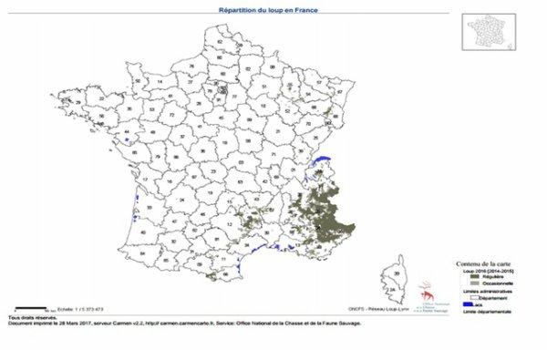 Loup: La hausse des abattages remet-elle en cause la survie de l'espèce en France?