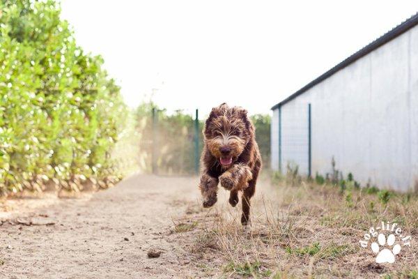 Un chien qui court vite