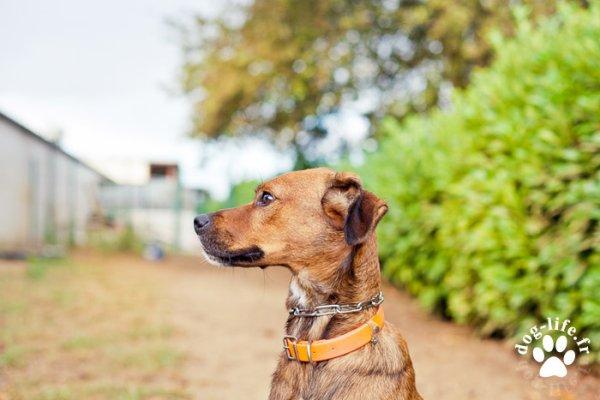 Un chien de profil