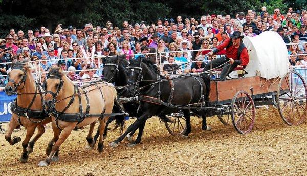 Tout les beaux chevaux !!!
