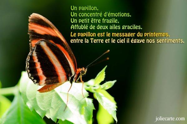 Un papillon c'est tout ça