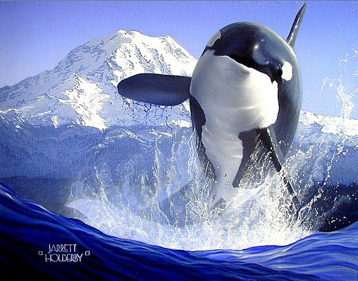 Un beau paysage avec une orque