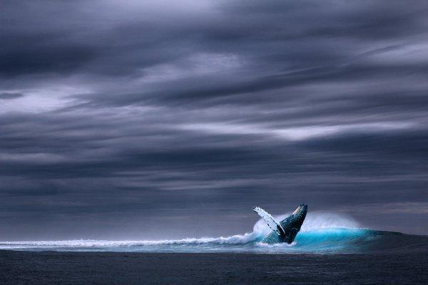 Une baleine dans une vague