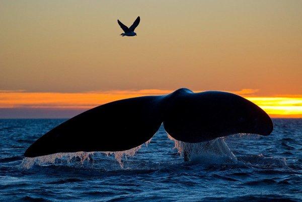 Belle queue de baleine survolé par un oiseau