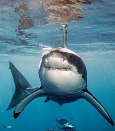 Quelques beaux requins (12/12)