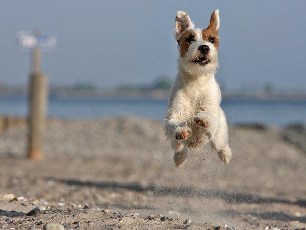 Un chien en l'air