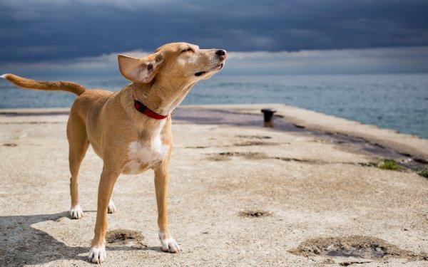 Un chien qui prend le vent