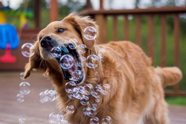 Un chien dans un monde de bulles