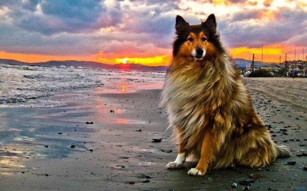 Un chien sagement assis
