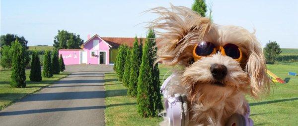Un chien à la cool