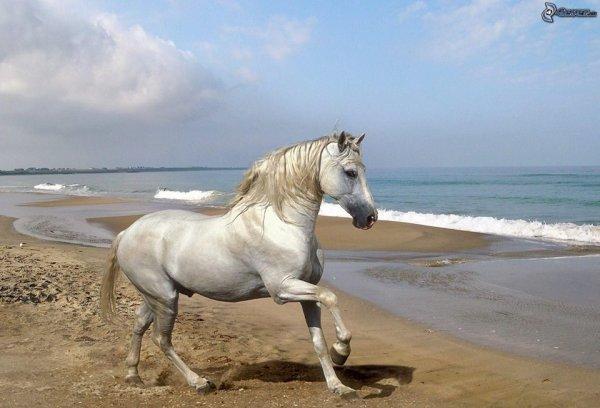 Un très beau cheval sur la plage