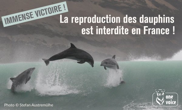 Stop à la reproduction de dauphin en captivité