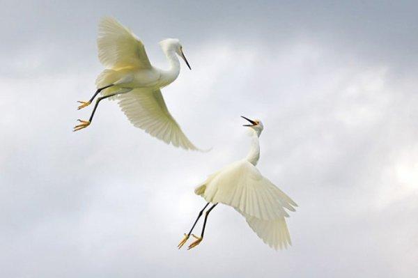 Une dispute entre oiseaux