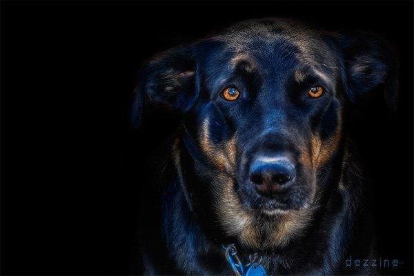 Un beau chien