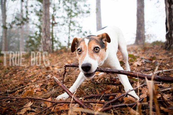 Un chien qui ramène un bâton