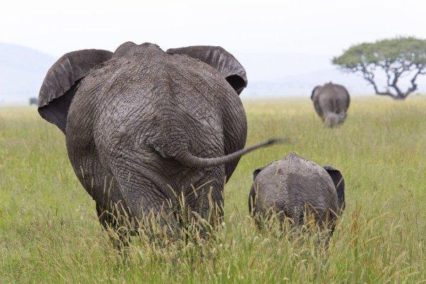 Des éléphants que tournent le dos aux humains