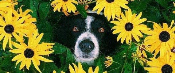 Un chien entouré de fleurs