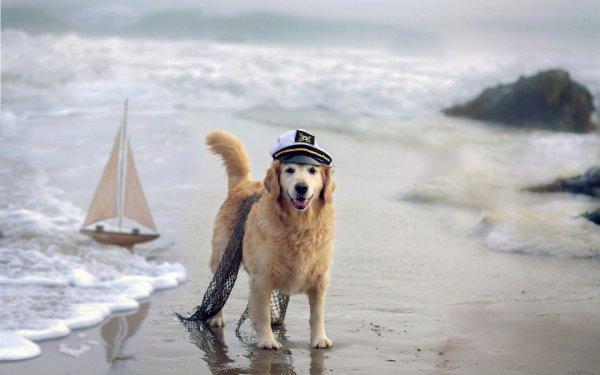 Capitaine toutou