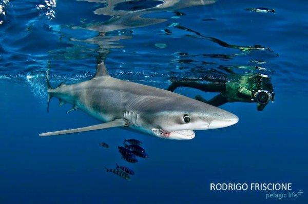 Un requin photogénique