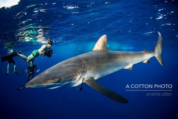 Un requin qui se fait photographier