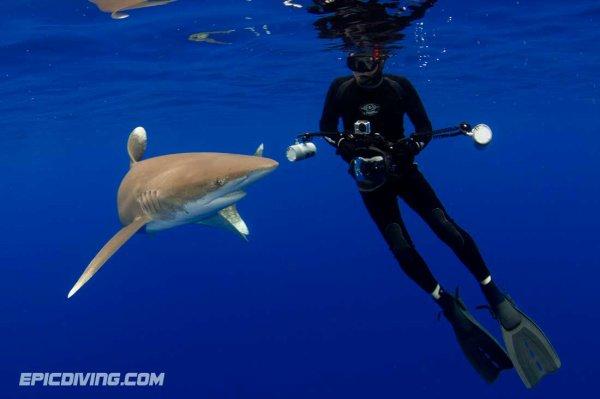 Un requin qui se demande ce que c'est que cette appareil