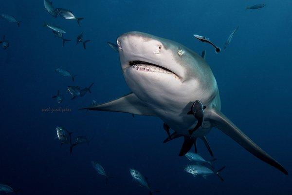 De beaux requins (6/6)