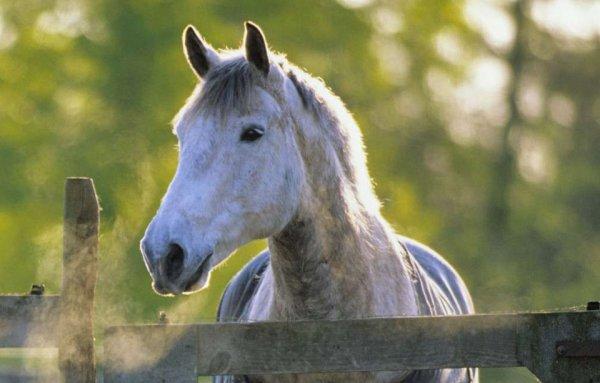 Quel beau cheval !!!