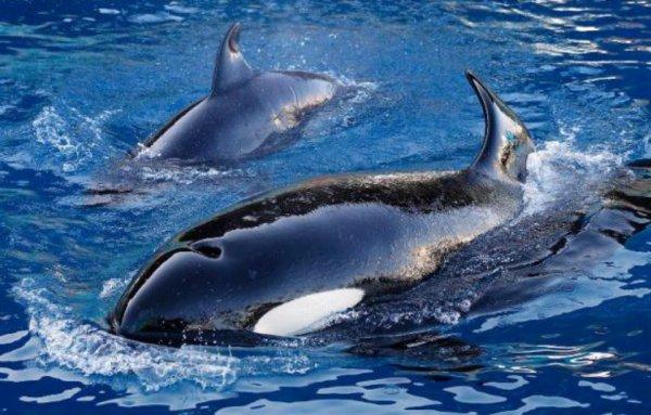 Décès d'une orque à Marineland: La plainte de Sea Shepherd finalement irrecevable
