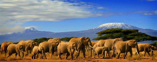 Des éléphants près d'un volcan