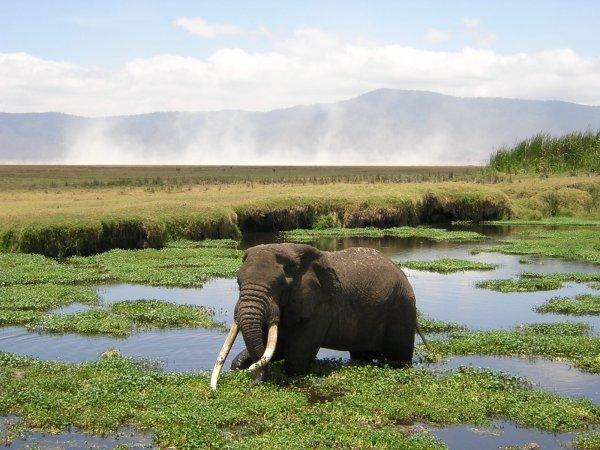 Un éléphant dans l'eau