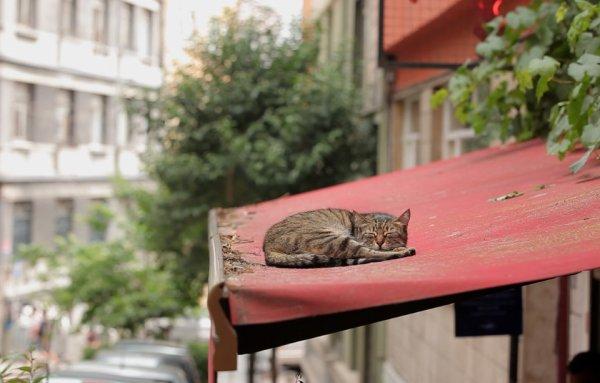 Un chat bien installer