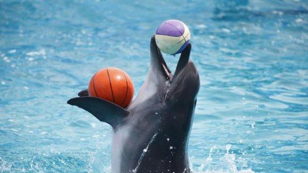 Un dauphin qui fait son show