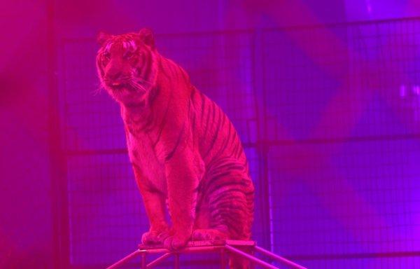 Gilbert Gruss : «Un cirque sans animaux, ce n'est plus un cirque»