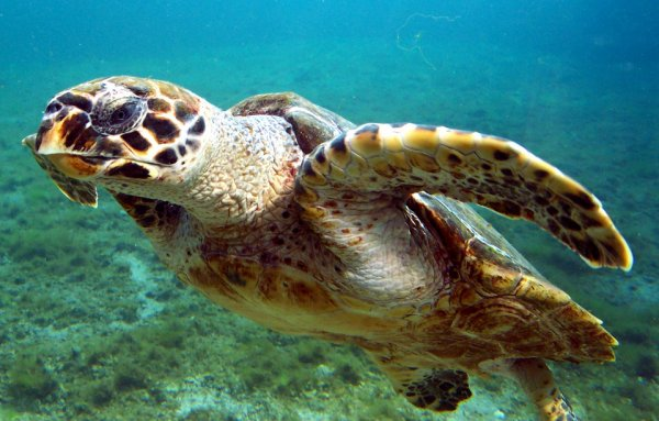Une magnifique tortue
