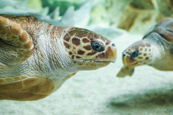 Deux belles tortues (1/2)