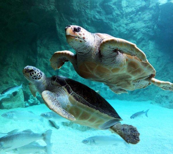 Deux belles tortues (2/2)