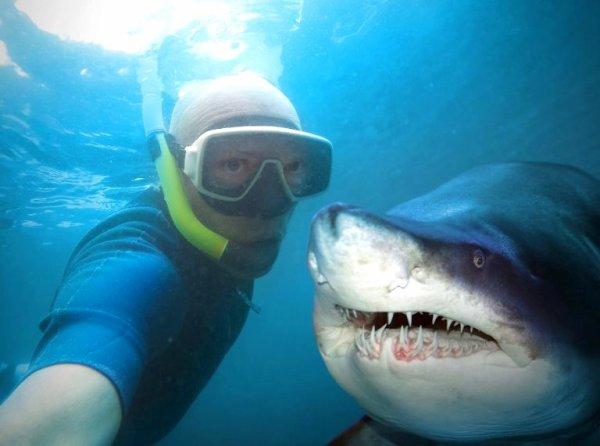 Qui veux faire un selfie avec ce requin ???