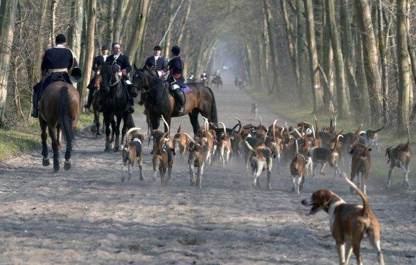 Pourquoi en France la chasse à courre a encore de beaux jours devant elle