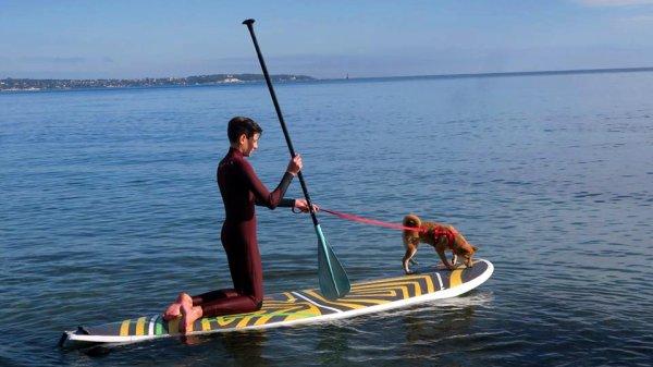 Un chien qui fait du paddle