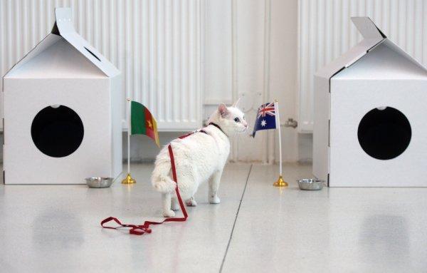 Achille le chat au musée de l'Ermitage en Russie