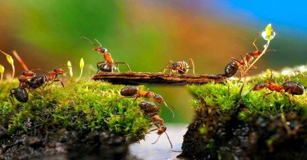 Les fourmis passent le pont