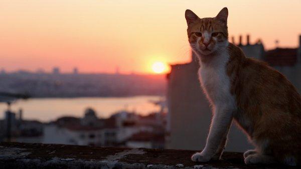 De beaux chats (2/5)