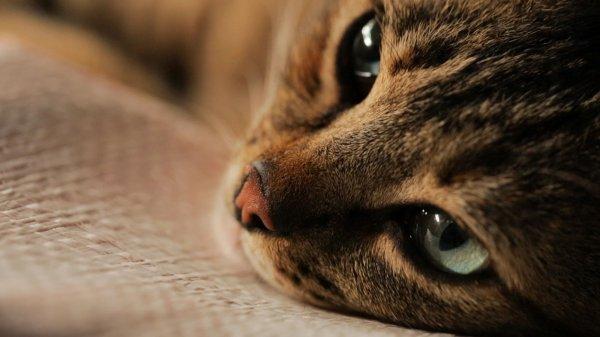 De beaux chats (4/5)