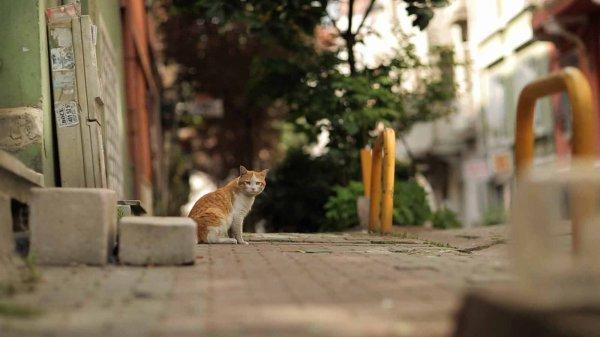 De beaux chats (5/5)