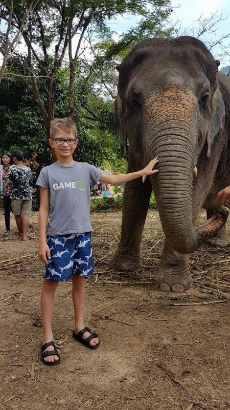 Un éléphant qui prend la pose