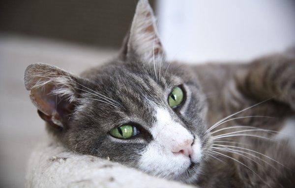 Un chat au repos